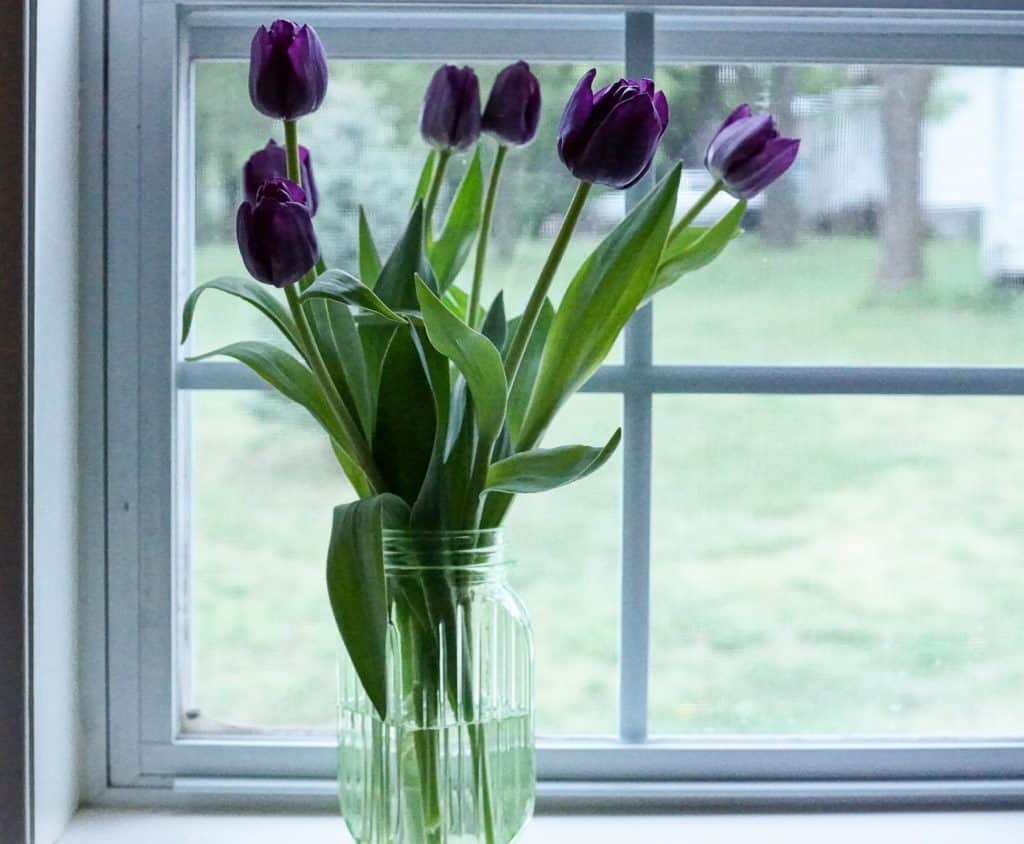 Tulips in old jar