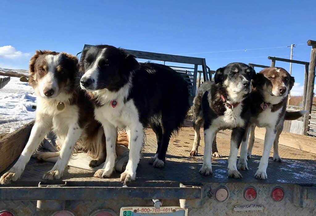 Canine Ranch Hands
