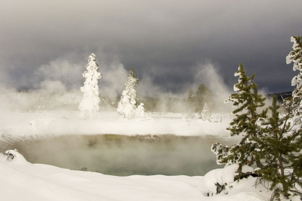 Winter in Yellowstone: ghost trees in the mist